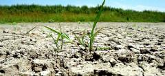 Forță majoră în agricultură din cauza secetei