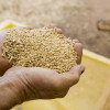 Subvenţii de miliarde pentru agricultori
