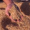 Importuri record de grâu