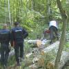 110 dosare penale din 700 de controale la lemn