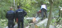 Invitația Romsilva la control de lemn tăiat ilegal