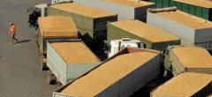 România a exportat cereale de 716,4 milioane euro