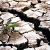 Polonia cere ajutorul UE pentru fermierii afectați de secetă