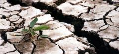 Începe plata despăgubirilor pentru pagubele produse de secetă