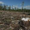 Aplicație pentru descoperirea tăierilor ilegale de păduri