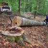 Sistemul de monitorizare a trasabilității lemnului, obligatoriu în toată țara
