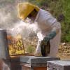 România, fruntaşă la producția de miere