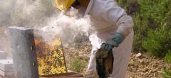 Ajutor de minimis pentru apicultori