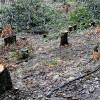 Pădure tăiată, pădurari bătuți