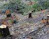 Americanii văd furturile din pădurile din Balcani. Românii nu