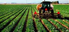 România, a opta putere agricolă a UE