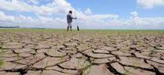 Proiectul de OUG pentru despăgubiri la secetă