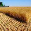 Stocuri record de grâu în Rusia