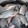 Încep lucrările la Bursa de peşte din Tulcea, de 18 milioane euro