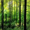 Garda de Mediu a închis 89 de exploatări forestiere