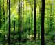 Victorie a statului pentru păduri cerute de urmașii baronului Banffy