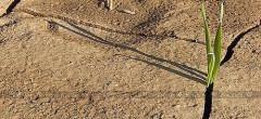 Vești bune de la ANAF pentru fermierii păgubiți de secetă