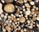 Războiul lemnului – etapa de stradă
