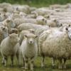 Ajutoare de stat pentru animale