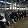 100 milioane de euro pentru vaci și viermi de mătase