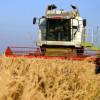Informațiile despre producția de grâu a României vin doar de la CE
