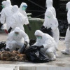 Gripa aviară la porţile României