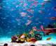Comoara ascunsă din oceane: 24.000 miliarde dolari