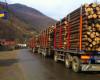 Sectorul forestier, marele câștigător al PNRR