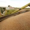 Producțiile mari afectează profiturile traderilor de cereale
