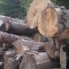 Amenzi de 30 milioane lei pentru furtul de lemne
