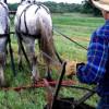 EximBank și Agricover majorează un împrumut destinat fermierilor