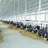 "Vaci ""subvenționate"""