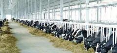 Finanțare pentru reducerea emisiilor de metan provenite de la animale