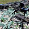 Cod al deșeurilor cu ajutorul profesorilor de la ASE