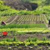 Producţia agricolă a crescut cu 2,5%