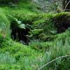Greenpeace a găsit 300.000 ha de păduri virgine