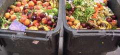 Ungurii risipesc 300.000 tone de alimente