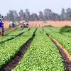 80% din fermieri şi-au primit subvențiile