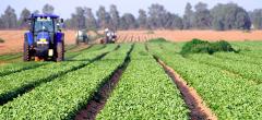 APIA a autorizat la plată 93% din fermierii Campaniei 2020