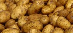 Nici cartofi nu mai avem!