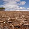Fond global pentru apărarea pădurilor