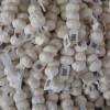 Cresc importurile de usturoi și praz