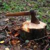 Crește numărul tăierilor ilegale de pădure