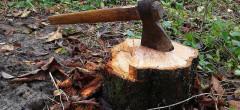 Pădurea: câți copaci, atâtea păreri