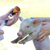 CJUE chemată facă ordine pe piața medicamentelor de uz veterinar