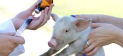 Lupta pe farmaciile veterinare