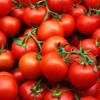 Programul tomata extins din cauza frigului din cea mai călduroasă iarnă