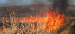 Arderea miriștilor poate lăsa fermierii fără subvenții
