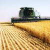 """""""Recordurile"""" lui Daea au scăzut prețul grâului"""