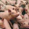 Interpretarea legislației lasă fără subvenții crescători de animale